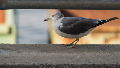 Seagull at the city port. Selective focus. Shallow depth of field.