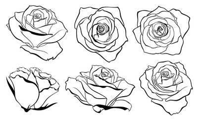 Vector set of detailed, isolated outline Rose bud sketches in black colour. Vector illustration for design on white background.