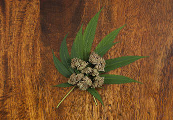 Cannabis sativa flower buds and leafs on wooden background