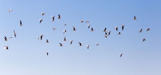 a flock of seagulls in flight
