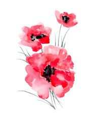 Watercolor illustration of a poppy on a white background.