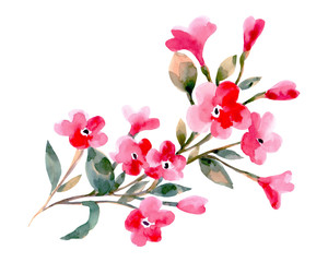 Watercolor illustration of a cherry flowers on a white background.