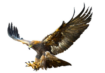 Golden eagle flying swoop hand draw and paint color on white background vector illustration.