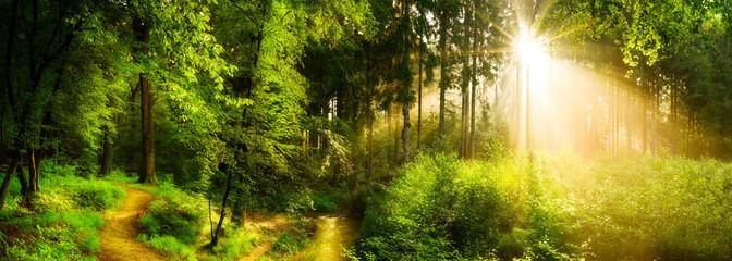 Waldweg neben einem Bach, idyllischer Sonnenaufgang im Wald