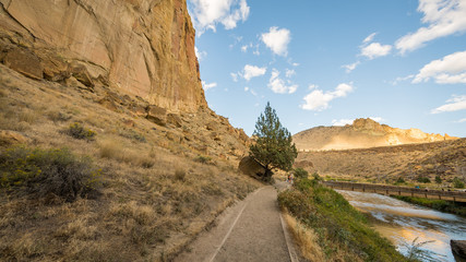 The path between the rock and the river. The sheer rock walls. Lonely tree on the riverbank. Beautiful landscape of yellow sharp cliffs. Smith Rock state park, Oregon