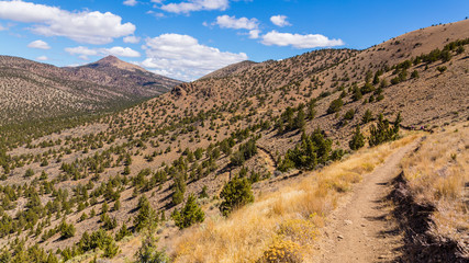 Beautiful landscape. Brown rock slopes are covered with pine trees. The path goes along the tops of the hills. Dry yellow grass grows on the slopes of the mountains. Smith Rock state park, Oregon