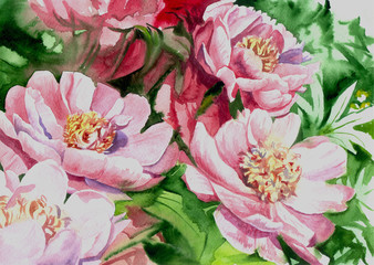 watercolor pink peony flowers