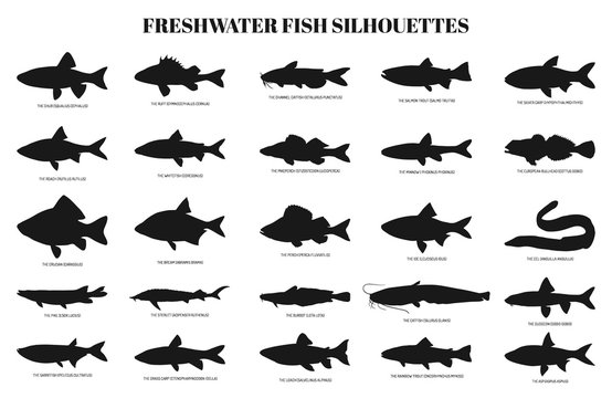 freshwater fishes silhouettes