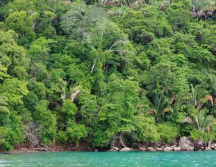 Rainforest shore Costa Rica