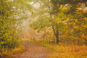Foggy morning autumn forest