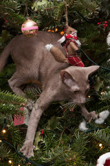 kitty tree decoration: Oriental Lilac cat climbing in the tree