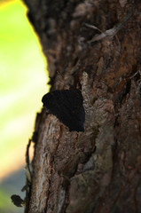 babachka on the tree