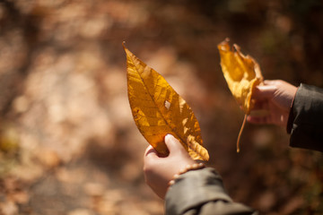Cropped Image Of Hands Holding Dry Leaves