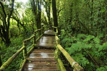 Tropical Rain Forest (Angka Nature Trail,Doi Inthanon National P