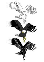 set of eagle bird animal hand drawn vector illustration design