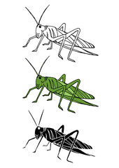 set of grasshopper animal hand drawn vector illustration design