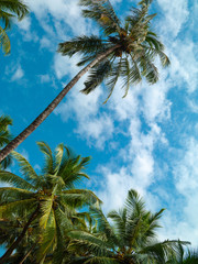 Palm trees and sky..