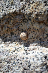 shell on the ancient stone wall