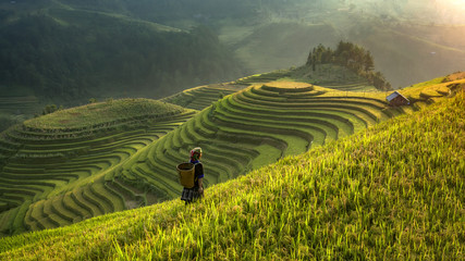 Smooth symbolize the city's Mu cang chai,Yenbai,Vietnam. Wall mural