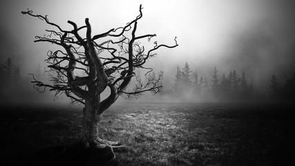 Dark Horror  Spooky  tree.