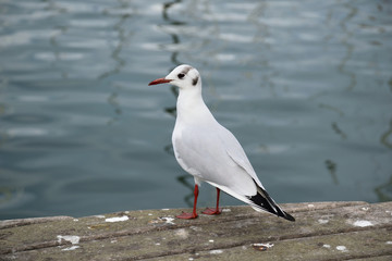 A seagull on the berth