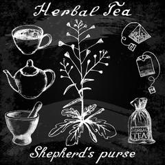 Shepherd's purse hand drawn sketch botanical illustration