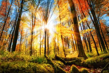 Wall Mural - Herbst Szenerie im Wald mit viel Sonne und buntem Laub