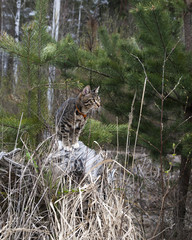 cat on a leash on the tree in the forest