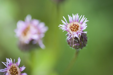 Closeup of flower with soft focus and blurry green background view. Taken in macro mode