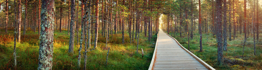 Viru bogs at Lahemaa national park in autumn. Wooden path at beautiful wild place in Estonia Fotomurales
