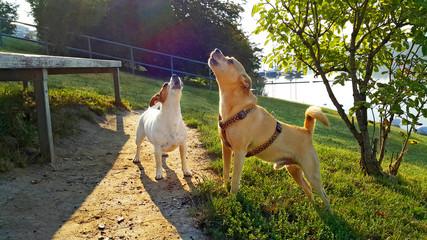 Hundefreunde begrüßen sich herzlich