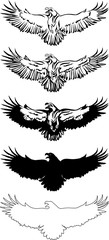 The eagle, soaring eagle, flying, illustration, color, vector