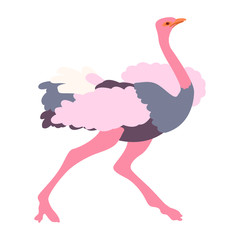 adult ostrich vector illustration  style Flat