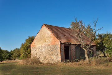 Old barn and tree against blue sky background. Abandoned farm buildings with weathered wall.