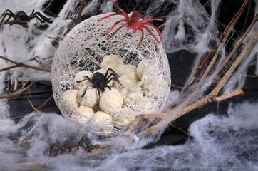 spider eggs in a cocoon