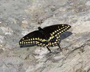 Beautiful photo of a butterfly on the rock