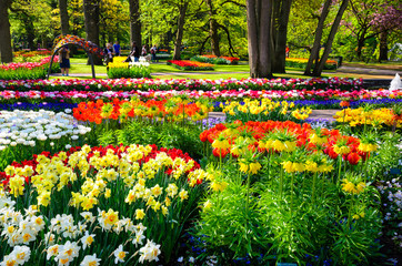 Blooming flowers in Keukenhof park in Netherlands, Europe.
