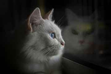 Close-Up Of White Cat Looking Away