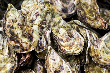 Close up of oyster shells, Galway, County Galway, Ireland