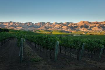 Pinot Noir Vineyards