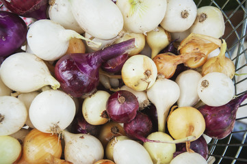 Basket full of onions (Allium cepa), Palmer, Alaska, United States of America