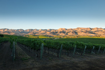 Pinot Noir Vineyards