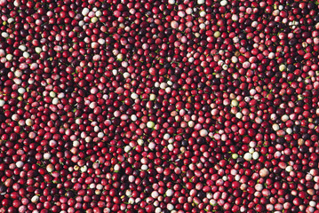 Close up of cranberries floating ready to be harvested, Richmond, British Columbia, Canada