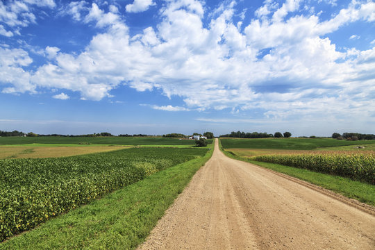 Dirt county road through soybean and corn crops, Richmond, Minnesota, United States of America