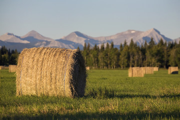 Hay bales in a green field at sunrise with mountains and trees the background,Calgary alberta canada