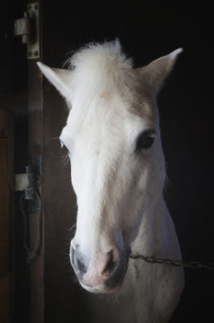 Portrait of a white horse,Mijas malaga province costa del sol spain