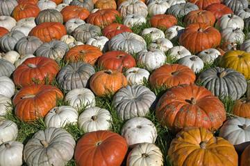 Variety Of Pumpkins, Near Half Moon Bay, California, United States Of America
