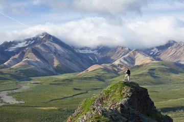 Senior Man Stands On A Rock Outcrop At Polychrome Pass With Alaska Range In The Background, Denali National Park & Preserve, Interior Alaska, Summer