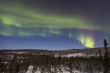 Scenic view of aurora borealis in the sky over the forest