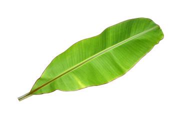 Banana leaf on a white background.